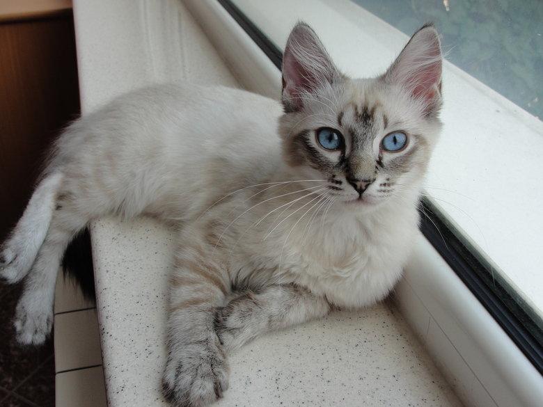 Lorena. cat.. that's adorable cat
