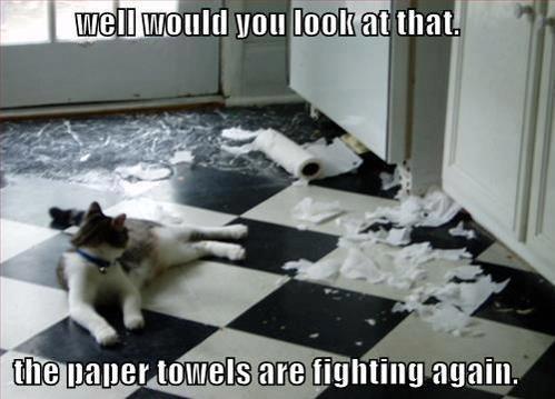 Paper Towel Gangs On The Street. . Paper Towel Gangs On The Street
