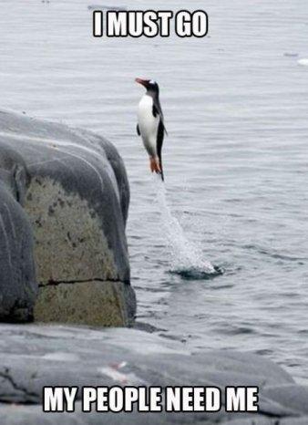 Penguin. . PENGUIN funny