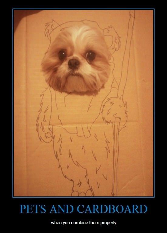 """Pets and cardboard. . Bi if ill """" ill! , lillol! ll D (illgal. N D E if t Alli, RI} Pets and cardboard Bi if ill """" ill! lillol! ll D (illgal N E t Alli RI}"""