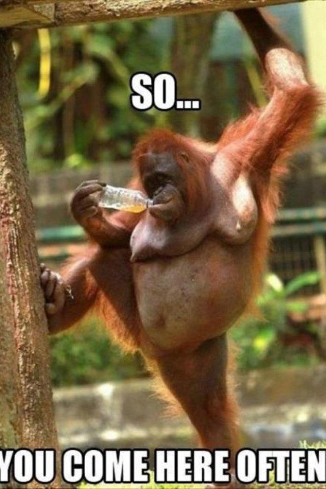 Pick up line. Love me?.. Original pic? monkey Bottle