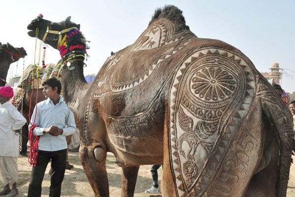 Pimp My Ride. .. pimp my hide elephants seahorses parachutes Milk