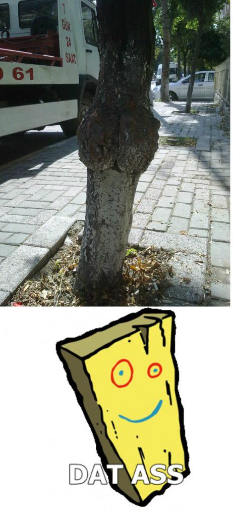 Plank. Plank. plank