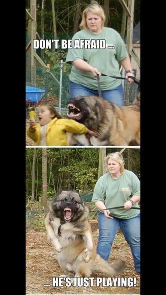 Playful dog. . Playful dog