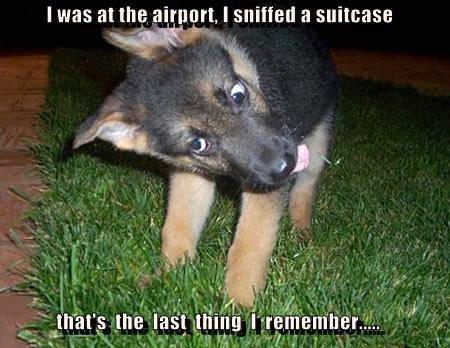 Police Pup. .. got milk bwahhaha brad