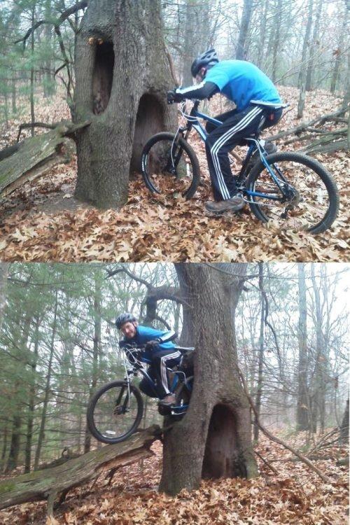 Portal Tree. . Portal Tree