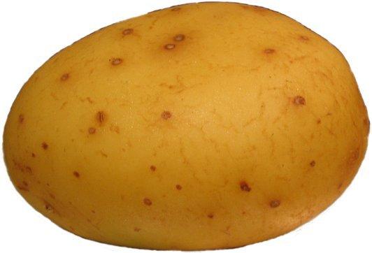 Potato. Potato Potato Potato Potato Potato Potato Potato Potato Potato Potato Potato Potato Potato Potato Potato Potato Potato Potato Potato Potato Potato Potat potato