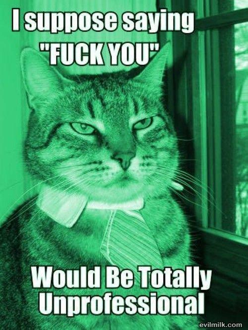 Professional. lol you. it. 1! iir. iii) lati' itm E) , Giorgi. thats why you call him a pussy cat funny professional