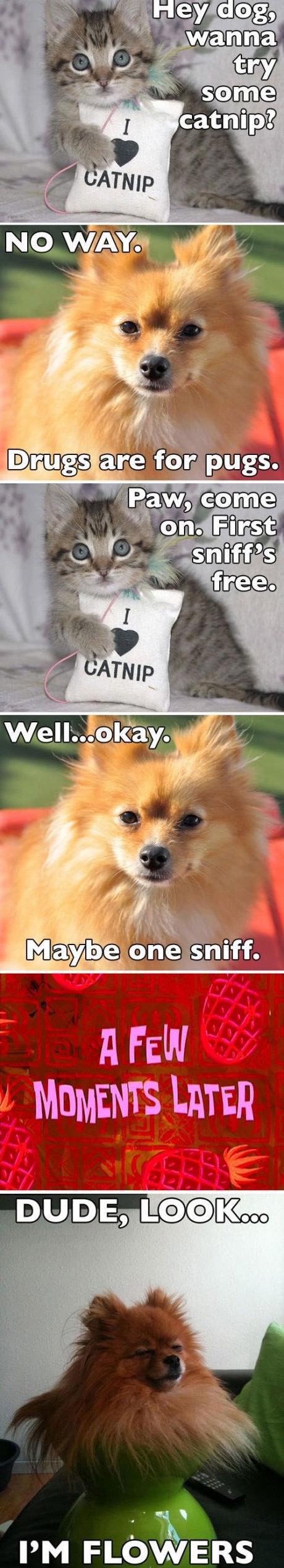 psst ... want some catnip?. . idioti.. e fotrih gs. Plfa« aome A FEW psst want some catnip? idioti e fotrih gs Plfa« aome A FEW