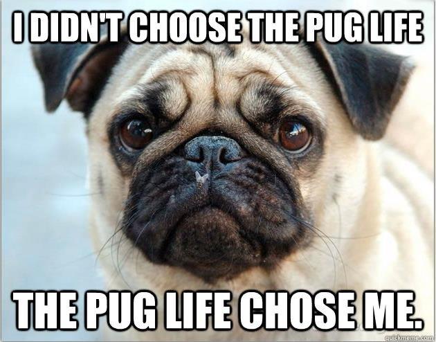 Pug Life. . Pug Life