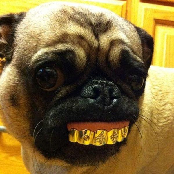 Pug Life. .. pug grills.......................oh god Pug Life pug grills oh god