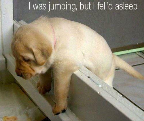 puppy. . Puppy Dog Jump asleep