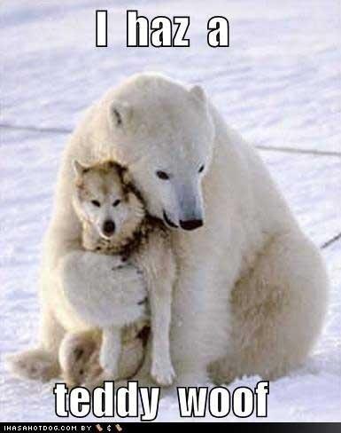 teddy wolf. . teddy wolf