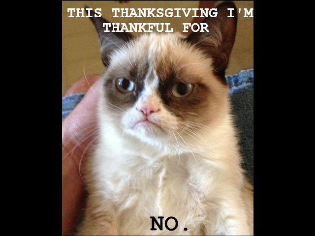 Thanksgiving?. i'm a fluffy bunny. Thanksgiving? i'm a fluffy bunny