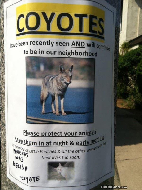 The coyote found a new prey. fuk u acne. have been recently A The coyote found a new prey fuk u acne have been recently A