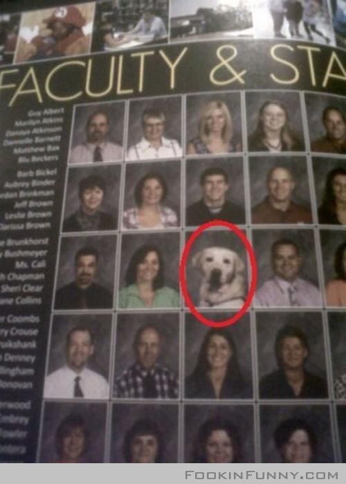 THE FACULTY. DOG TEACHERS!.. Ms. Cali THE FACULTY DOG TEACHERS! Ms Cali
