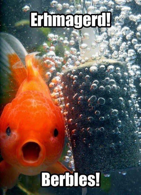 The Fishy. .. MY BUBBLES. Fish Bubbles