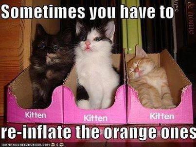 The orange ones.... . nun have In 1 kjl f I In I tite M' flibble, The orange ones nun have In 1 kjl f I tite M' flibble