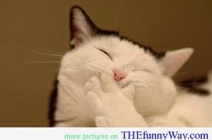 this cat its ammused. this cat its ammused. this cat its ammused