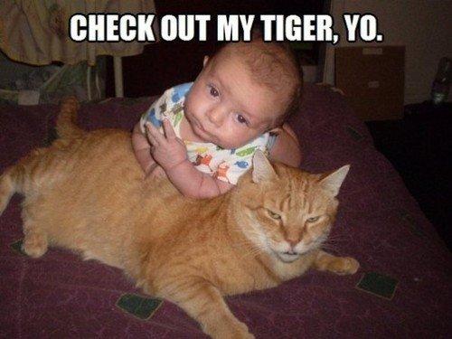 "Tigers. . NIT MY TIGER. "" Tigers NIT MY TIGER """