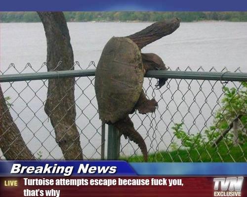 Tortoise. tortoise. Breaking Ne WE LIVE allennis BERNIE WEI mill, thatt' s Itiots. RUUUUUUUUUUUN!!! Tortoise tortoise Breaking Ne WE LIVE allennis BERNIE WEI mill thatt' s Itiots RUUUUUUUUUUUN!!!