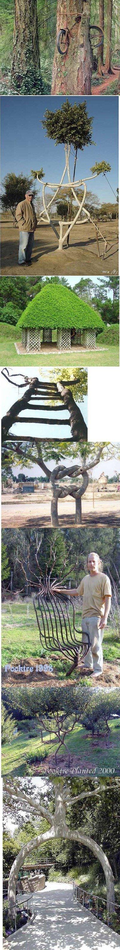 trees. . trees