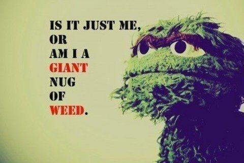true or false?. . OR a i 'iil AM I A GIANT NIH} WEED.. thumb up just because it's Oscar. true or false? OR a i 'iil AM I A GIANT NIH} WEED thumb up just because it's Oscar