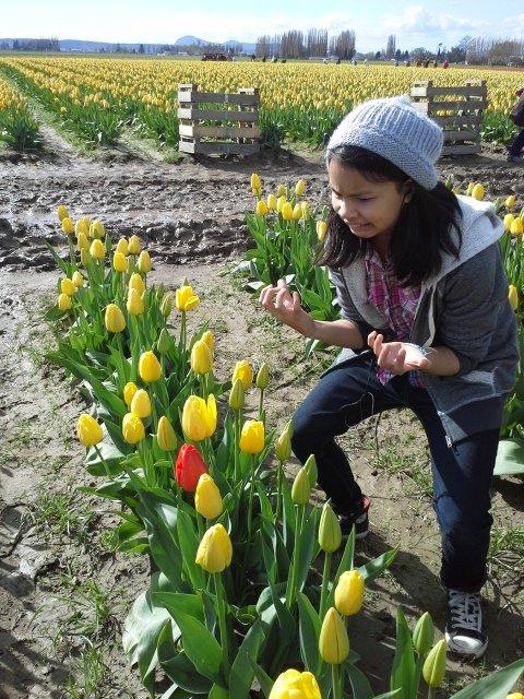 Tulip, Y u do dis. .. skills off da chartz Tulip Y u do dis skills off da chartz
