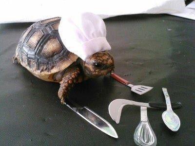 "turtle chef. .. ""Ahh, "" turtle chef ""Ahh """