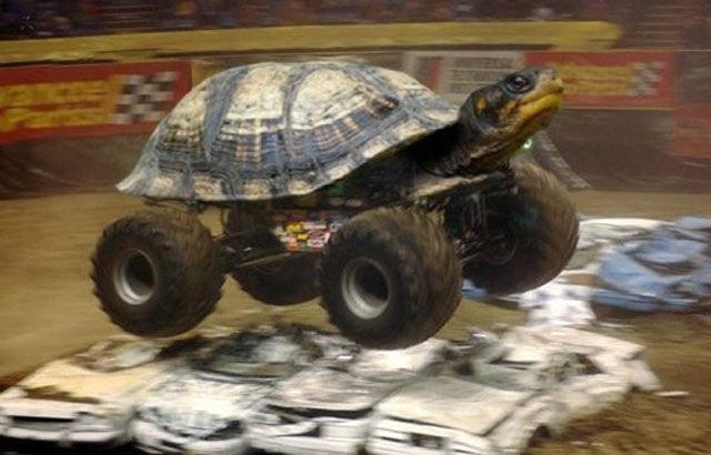 Turtle Truck. .. Turtle Tank Turtle Truck Tank