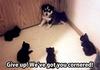 Cat comp 2