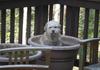Dog On Pot