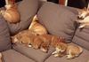 doge heaven