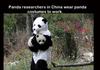 because pandas