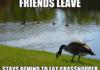 Social Dynamics of Geese
