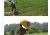 Farmer Skeltal