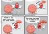 the brains