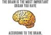 Classic Brain...