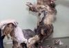 Amazing dog transformation
