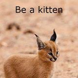 <b>Bobcat</b>
