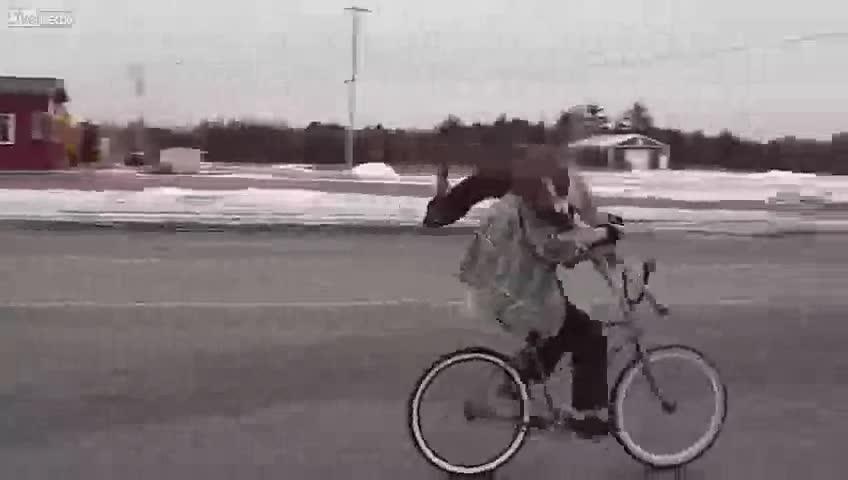 Meanwhile in Canada. .. Definitely legit. I was deer.