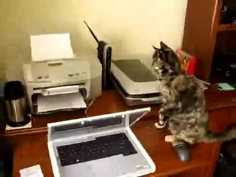 Kitty vs. Printer.. .. Dumbass cat.