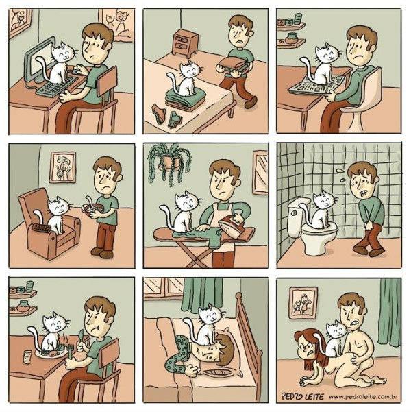 Damn cat. not mine, just sharing.. Damn cat not mine just sharing