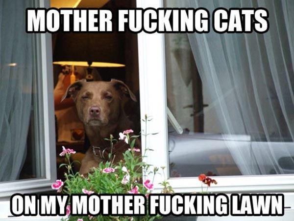 Damn Cats. . Mama nil' ii' iain can idiiot MY ' . Damn Cats Mama nil' ii' iain can idiiot MY '