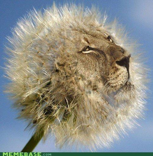 Dande-lion. lion.. OH AHAHAHHAHAHAHHA SO FAHNY JOKE pun Lion
