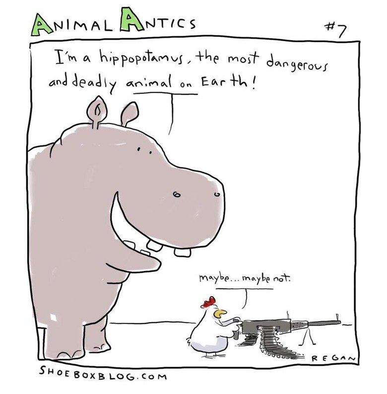 Dangerous. Hippos kill about 30 people every day. 417 l I (lloll I it' ffii' allt S' twee Bianca LOG. corn tags