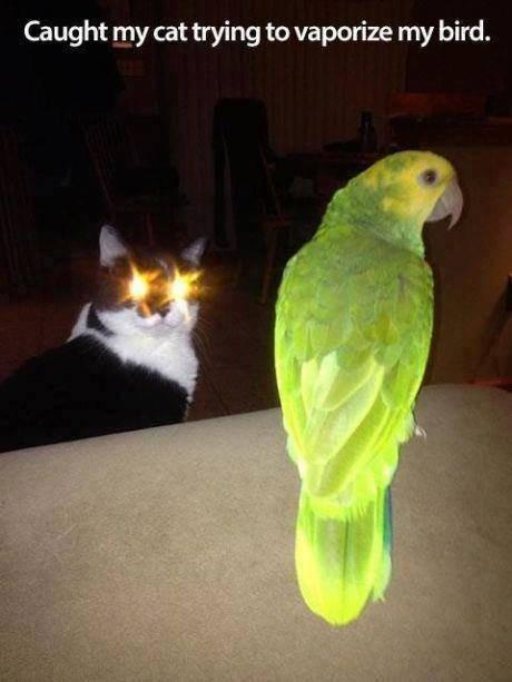 Death to All Birds. BTW not mine.. Caught my cat trying to vaporize my bird.. Assuming direct control. die Birds