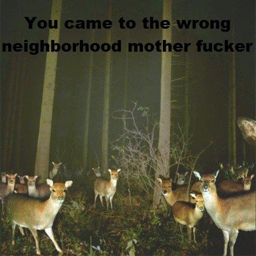 Deer. Not OC, it's from the creepypasta wiki. Deer Neighborhood fucked