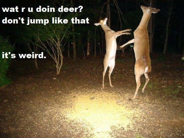 Deer. Stop That. wat r u doin deer? ', don' t jump like that it' s weird. Deer Stop That wat r u doin deer? ' don' t jump like that it' s weird