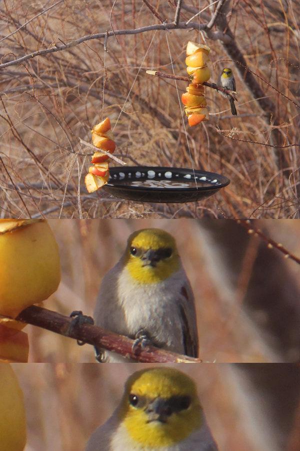 disgruntled bird. I build a bird bath and feeder today, this bird was not pleased... that bird gotta mouth. disgruntled bird